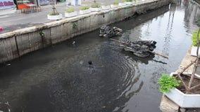 Trash keeper thai man collect garbage in underwater stock video