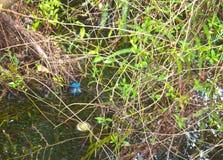 Trash in pristine wetlands 2 Stock Photos