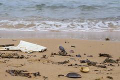 Trash on seashore. Garbage on sand beach. Ecological disaster in sea. Plastic in sea shore. royalty free stock images