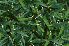 Traslapo verde de la hoja del lirio Foto de archivo libre de regalías