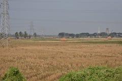 Trasmissione di griglia di potere sopra il campo di azienda agricola della risaia vicino ad una piccola fabbrica Fotografie Stock Libere da Diritti