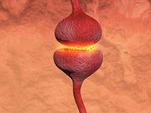 Trasmissione di un neurone attraverso una sinapsi Immagini Stock