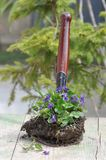 Trasplante de la flor Imagen de archivo libre de regalías