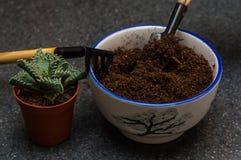 Trasplante de los succulents del sitio creación de la composición imagen de archivo libre de regalías