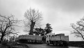 Trasplante del árbol Foto de archivo libre de regalías