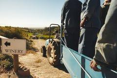 Trasportando l'uva dalla vigna per wine produttore Fotografie Stock