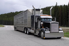 Trasportatore del bestiame Immagine Stock Libera da Diritti
