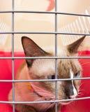Trasportatore del gatto. Immagini Stock Libere da Diritti