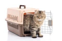 Trasportatore dell'animale domestico del vk del ponibcctyc del gatto isolato su fondo bianco immagini stock