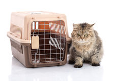 Trasportatore dell'animale domestico del vk del ponibcctyc del gatto isolato su fondo bianco fotografie stock libere da diritti