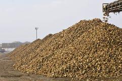 Trasportatore delle barbabietole Fotografie Stock