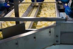Trasportatore di lavorazione delle patate Fotografie Stock Libere da Diritti