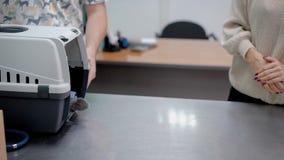 Trasportatore entrante dell'animale domestico del gatto grigio video d archivio