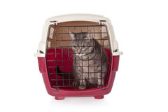 Trasportatore interno chiuso dell'animale domestico del gatto isolato Fotografia Stock Libera da Diritti