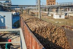 Trasporti i vagoni con le barbabietole da zucchero sulla ferrovia allo zucchero di barbabietole pl fotografia stock
