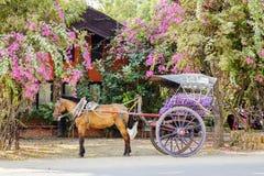 Trasporto in Bagan, Myanmar Fotografia Stock Libera da Diritti