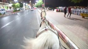 Trasporto con il video HD del cavallo stock footage