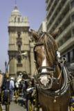 Trasporto del cavallo Fotografia Stock