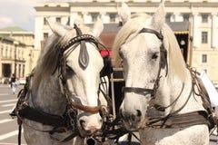 Trasporto del cavallo Immagini Stock Libere da Diritti