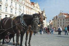 Trasporto del cavallo in Città Vecchia Praga Immagine Stock