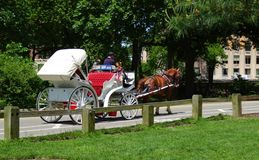 Trasporto del cavallo con i cavalli che attraversano through il parco Immagine Stock Libera da Diritti
