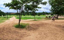 trasporto del cavallo da equitazione di manifestazione di autorità immagine stock libera da diritti