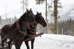 Trasporto del cavallo in montagne fotografia stock libera da diritti