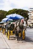 Trasporto del cavallo parcheggiato in Andalusia, spagna Immagine Stock