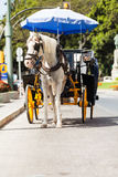Trasporto del cavallo parcheggiato in Andalusia, spagna Immagini Stock Libere da Diritti