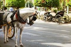 Trasporto del cavallo parcheggiato in Andalusia, spagna Fotografie Stock