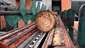 Trasporto del ceppo alla linea della sega Linea di taglio in segheria Elaborazione del legname stock footage