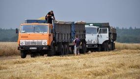 Trasporto del grano field_2 Fotografia Stock