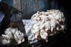 Trasporto del pollo a Jakarta Immagini Stock