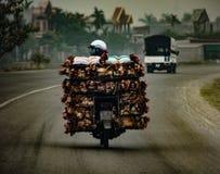 Trasporto del pollo vivo su una motocicletta nel Vietnam Asia fotografie stock libere da diritti