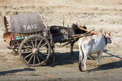 Trasporto del tassì del carrello del bue in Myanmar Fotografia Stock