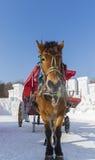 Trasporto della neve di inverno Fotografie Stock Libere da Diritti