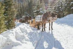 Trasporto della slitta del cavallo Immagini Stock Libere da Diritti