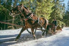 Trasporto della slitta del cavallo Fotografia Stock Libera da Diritti