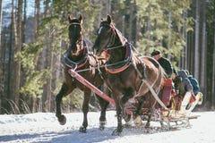 Trasporto della slitta del cavallo Immagine Stock Libera da Diritti