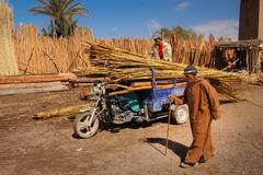 Trasporto delle canne da zucchero Skoura morocco Fotografia Stock Libera da Diritti