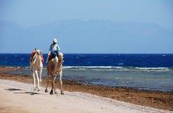 Trasporto di eco del Sinai Fotografia Stock