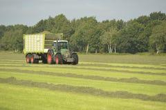 Trasporto di erba tagliata con il rimorchio verde dell'erba e del trattore Fotografia Stock