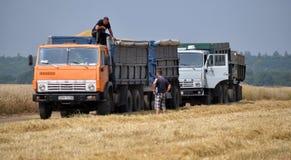 Trasporto di grano dal campo Immagine Stock Libera da Diritti