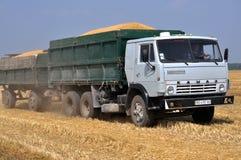 Trasporto di grano dal campo Fotografia Stock