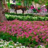 Trasporto rosa nella città di Palma de Mallorca Fotografie Stock Libere da Diritti