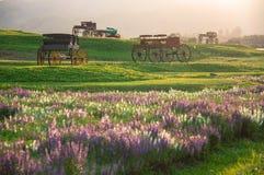 Trasporto storico del bello paesaggio nel giacimento di fiore Immagine Stock