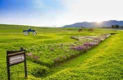 Trasporto storico del bello paesaggio nel giacimento di fiore Fotografia Stock Libera da Diritti