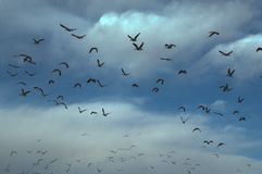 trassla till migratingvatten Royaltyfri Foto