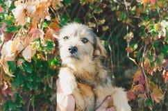 Trastorno infeliz lindo del perro, perro solo imagen de archivo libre de regalías