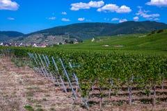 Trasy des vins Fotografia Royalty Free